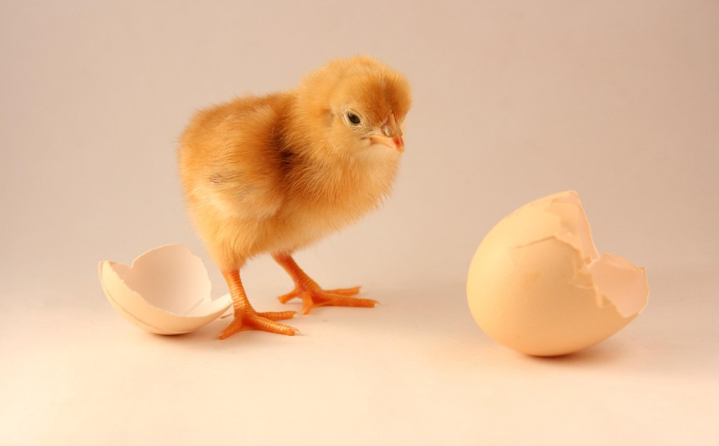 The Chicken or the Egg: IT Version<p></noscript><b> <a href=